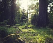Pohorje u Sloveniji nudi razne opcije smještaja